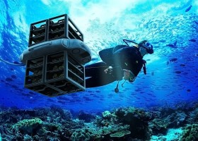Un dron capaz de plantar 100 corales al día para reforestar arrecifes